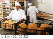 Fresh baked bread in crate in bakery. Стоковое фото, фотограф Яков Филимонов / Фотобанк Лори