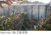 Dew on a spider web. Стоковое фото, фотограф Александр Карпенко / Фотобанк Лори