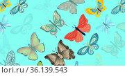 Composition of multiple rows of butterflies on blue background. Стоковое фото, агентство Wavebreak Media / Фотобанк Лори