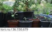Pots with diverse plant seedlings at garden center. Стоковое видео, агентство Wavebreak Media / Фотобанк Лори