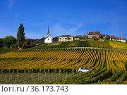 Fechy, human settlement in vineyards, Fechy , La Cote , La Cote Vaudoise... Стоковое фото, фотограф Danuta Hyniewska / age Fotostock / Фотобанк Лори