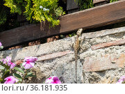 Ящерица сидит на стене дома. Стоковое фото, фотограф Павел Сапожников / Фотобанк Лори