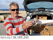 Taubenzüchter präsentiert stolz eine Brieftauben, Mellieha, Malta. Стоковое фото, фотограф Zoonar.com/Erich Teister / age Fotostock / Фотобанк Лори