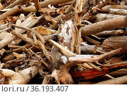 Closeup of a pile of bleached drift wood. Стоковое фото, фотограф Zoonar.com/Amelia Martin / easy Fotostock / Фотобанк Лори