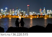 Little blue penguin (Eudyptula minor), two standing on rocks at night, silhouetted against Melbourne city lights. St Kilda breakwater, Victoria, Australia. December 2016. Стоковое фото, фотограф Doug Gimesy / Nature Picture Library / Фотобанк Лори