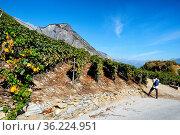 Wine tourism, male tourist taking pictures of vineyards in Rhone ... Стоковое фото, фотограф Danuta Hyniewska / age Fotostock / Фотобанк Лори