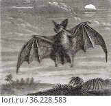 The spectral bat (Vampyrum spectrum), also called the great false... Стоковое фото, фотограф Classic Vision / age Fotostock / Фотобанк Лори