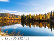 Autumn Altai and the Biya River with autumn taiga on the banks and reflection in the water. Altai Republic, Russia. Стоковое фото, фотограф Наталья Волкова / Фотобанк Лори