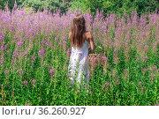 Young woman herbalist gathers fireweed outdoors. Стоковое фото, фотограф Евгений Харитонов / Фотобанк Лори