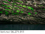 Small ferns grow upside down on the vault of the cave above the water. Стоковое фото, фотограф Евгений Харитонов / Фотобанк Лори