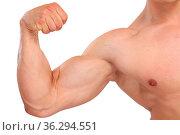 Bizeps stark Stärke Kraft Power Muskeln Mann Bodybuilder Bodybuilding... Стоковое фото, фотограф Zoonar.com/Markus Mainka / easy Fotostock / Фотобанк Лори