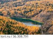 View from above of on the picturesque lake Uchkel and the autumn taiga in the Ulagan plateau, Altai Republic, Russia. Стоковое фото, фотограф Наталья Волкова / Фотобанк Лори