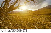 Time lapse of death tree and dry yellow grass at mountian landscape with clouds and sun rays. Horizontal slider movement. Стоковое видео, видеограф Александр Маркин / Фотобанк Лори