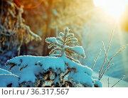 Winter landscape.frozen taiga forest. Стоковое фото, фотограф Zoonar.com/MYCHKO / easy Fotostock / Фотобанк Лори