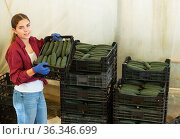 Woman stacking crates with cucumbers. Стоковое фото, фотограф Яков Филимонов / Фотобанк Лори