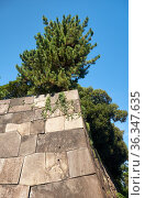 The stone wall of the old Edo castle in the Tokyo Imperial Palace. Tokyo. Japan (2019 год). Стоковое фото, фотограф Serg Zastavkin / Фотобанк Лори