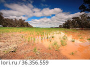 Flooded crops in Central West NSW, a low flying plane above inspects... Стоковое фото, фотограф Zoonar.com/Leah Anne Thompson / easy Fotostock / Фотобанк Лори
