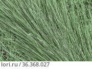 Texture background mown dry green grass hay in the pasture. Стоковое фото, фотограф Светлана Евграфова / Фотобанк Лори
