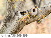 Details of a tree trunk and its colorful leaves in the gardens of... Стоковое фото, фотограф Marquicio Pagola / age Fotostock / Фотобанк Лори