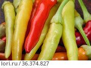 Hot bitter pepper. Стоковое фото, фотограф Владимир Белобаба / Фотобанк Лори