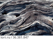 Muster in einem vertrockneten Baumstamm auf Big Island, Hawaii, USA... Стоковое фото, фотограф Zoonar.com/Dirk Rueter / easy Fotostock / Фотобанк Лори
