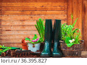Flowers and plants wait the gardener. Still life on the wooden table... Стоковое фото, фотограф Zoonar.com/Oksana Shufrych / easy Fotostock / Фотобанк Лори