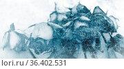 Rosen verblüht weiß hintergrund erinnerung konzept trauer. Стоковое фото, фотограф Zoonar.com/rieger wolfgang / easy Fotostock / Фотобанк Лори
