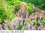Girl and lavender shrub. Стоковое фото, фотограф Яков Филимонов / Фотобанк Лори