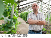 Male horticulturist near cucumber seedlings in hothouse. Стоковое фото, фотограф Яков Филимонов / Фотобанк Лори