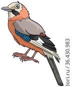 Cartoon illustration of jay bird comic animal character. Стоковое фото, фотограф Zoonar.com/Igor Zakowski / easy Fotostock / Фотобанк Лори