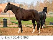 Pferde zum Reiten auf einer Farm im Herrenkrug bei Magdeburg. Стоковое фото, фотограф Zoonar.com/Heiko Kueverling / easy Fotostock / Фотобанк Лори