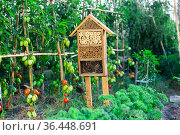 Insect hotel between the tomato beds gives protection and nesting aid to bees and other insects. Стоковое фото, фотограф Яков Филимонов / Фотобанк Лори