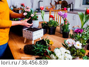 Female gardener is planting a flower in a pot. Various flowers in... Стоковое фото, фотограф Zoonar.com/OKSANA SHUFRYCH / easy Fotostock / Фотобанк Лори