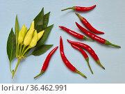 Colorful arrangement of variety peppers closeup, top view, ingre. Стоковое фото, фотограф Алексей Голованов / Фотобанк Лори