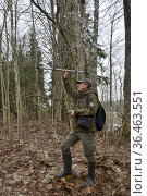 Researcher radio tracking Siberian flying squirrel (Pteromys volans) in mature mixed forest. Muraka Forest Reseve, near Lisaku, Estonia. April 2018. Model released. Стоковое фото, фотограф Nick Upton / Nature Picture Library / Фотобанк Лори
