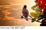 Winter tropical treescape. Indian Cormorant (Phalacrocorax fuscicollis... Стоковое фото, фотограф Zoonar.com/Maximilian Buzun / easy Fotostock / Фотобанк Лори