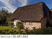 Reetdachhaus, Friesenhaus, Nebel, Insel Amrum, Nordsee, Nordfriesland... Стоковое фото, фотограф Zoonar.com/Stefan Ziese / age Fotostock / Фотобанк Лори