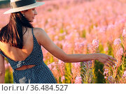 Girl in hat on blooming Sally flower field. Lilac flowers and woman. Стоковое фото, фотограф Zoonar.com/Max / easy Fotostock / Фотобанк Лори