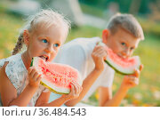 Funny little toddler kids brother and sister eating watermelon on... Стоковое фото, фотограф Zoonar.com/Max / easy Fotostock / Фотобанк Лори