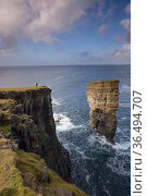Woman on the cliffs facing sea stack, west coast of Mainland, Orkney Isles, Scotland. October 2020. Стоковое фото, фотограф David Noton / Nature Picture Library / Фотобанк Лори