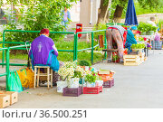 Russia, Samara, June 2021: Elderly women sell the gifts of nature and the harvest from their dacha on the street. Russian text: fresh meat. Редакционное фото, фотограф Акиньшин Владимир / Фотобанк Лори