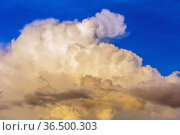 beautiful cumulus clouds against a blue sky in the rays of the setting sun. Стоковое фото, фотограф Акиньшин Владимир / Фотобанк Лори