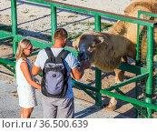 """Посетители зоопарка кормят жирафа, парк """"Тайган"""", Крым (2020 год). Редакционное фото, фотограф Вячеслав Палес / Фотобанк Лори"""
