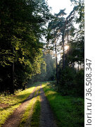 Waldweg , Sonne, wald, weg, forstweg, sonnenschein, sonnig, landschaft... Стоковое фото, фотограф Zoonar.com/Volker Rauch / easy Fotostock / Фотобанк Лори