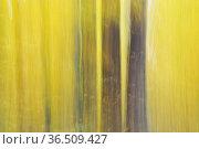Herbstwald, abstrakt, wald, baum, stamm, baumstamm, baumstämme, verwischt... Стоковое фото, фотограф Zoonar.com/Volker Rauch / easy Fotostock / Фотобанк Лори