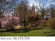 View of Speyer Cathedral Park in Spring with Magnolia Tree. Стоковое фото, фотограф Zoonar.com/Nailia Schwarz / easy Fotostock / Фотобанк Лори
