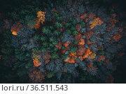 Aerial view of autumn forest in austria moody edit. Стоковое фото, фотограф Zoonar.com/Maximilian Pawlikowsky / easy Fotostock / Фотобанк Лори