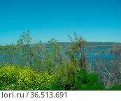 Sumpflandschaft , Selcuk, Türkei, sumpf, landschaft, kusadassi, wasser... Стоковое фото, фотограф Zoonar.com/Volker Rauch / easy Fotostock / Фотобанк Лори