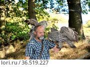 Eule im Falkenhof Harz,Burg Regenstein.Burrowing Owl (Athene cunicularia... Стоковое фото, фотограф Zoonar.com/Arvidas Saladauskas / age Fotostock / Фотобанк Лори