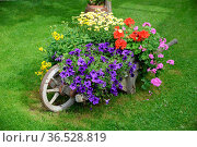 Blumenschmuck, blumen, garten, deko, dekoration, zierpflanze, zierpflanzen... Стоковое фото, фотограф Zoonar.com/Volker Rauch / easy Fotostock / Фотобанк Лори